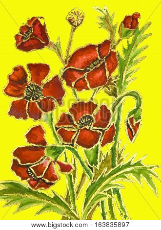 Poppies on yellow background painted illustration watercolour and gouache.
