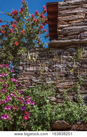 Portugal Monsaraz . Medieval walls of buildings and fences lined with rough stone overgrown with wild flowers. Sunny spring day a bright blue sky .