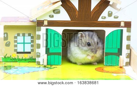 Hamster in the toy house. MIni farm