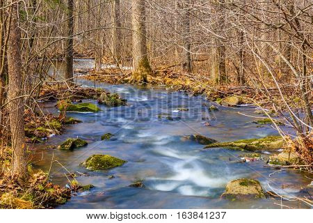 Woods with a stream flowing in the Wisconsin spring time.