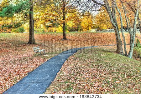 Sidewalk paved path with bench in field of many fallen leaves in autumn