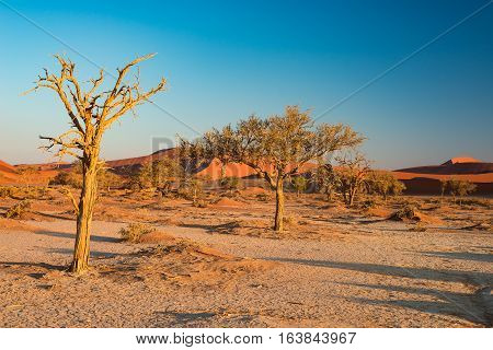 The Scenic Sossusvlei And Deadvlei, Clay And Salt Pan With Braided Acacia Trees Surrounded By Majest