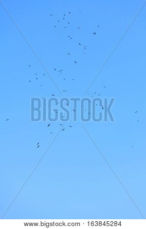 flock of birds flying high in the blue sky