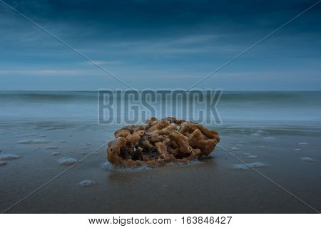 Sea Sponge Washed Up on Beach with blurred waves in background