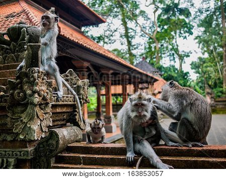 Monkeys on a temple wall with babys playing around