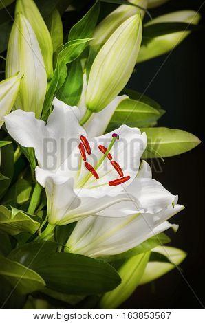 White Lily Flower Bouquet Over Dark Background