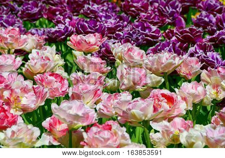 Photo of Gardening and Landscaping Bright Tulip Flowers
