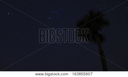 The Orion constellation hovers over a lonely palm tree