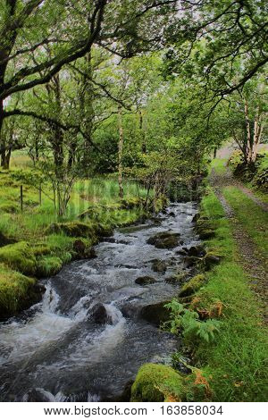 a stream flowing through a wooded area
