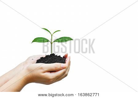 Hand holding a young baby tree isolated / Protect and conserve nature concept