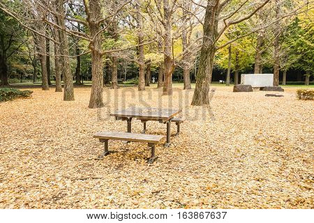 wooden bench in the park with falling leaves on the ground