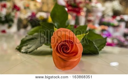 Orange rose bud that is on the table