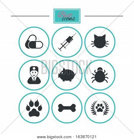 Veterinary, pets icons. Paw, syringe and bone signs. Pills, cat and doctor symbols. Round flat buttons with icons. Vector