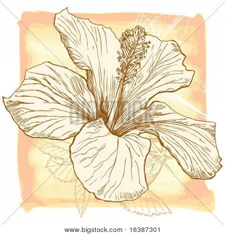 Hibiskus-Blume-Vektor-Hand zeichnen