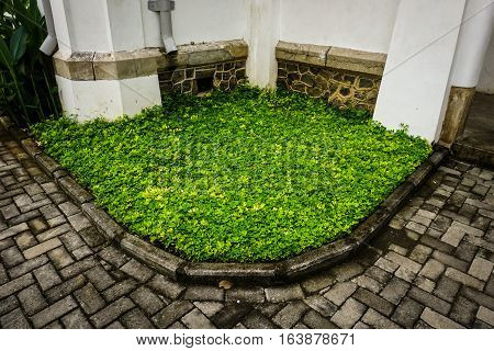 a little green grass yard in a corner of Lawang Sewu building photo taken in Semarang Indonesia java