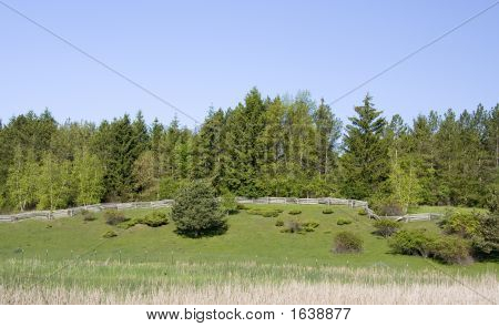 Pine Forest And Rustic Split Rail Fence