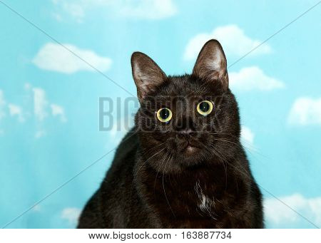 Portrait of a black cat with green eyes large dilated pupils looking at viewer blue sky with clouds background