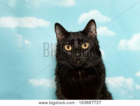 Portrait of a petite black cat with yellow eyes looking at viewer blue background sky with clouds. copy space
