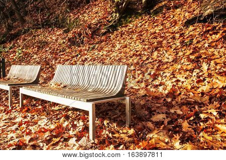 Bench in autumn park. Forest hill with fall foliage and couple of modern benches. November landscape