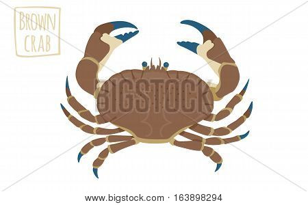 Brown crab,  funny vector illustration cartoon style
