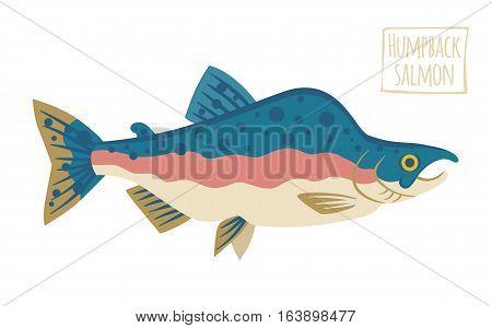 Humpback Salmon,  funny vector illustration cartoon style