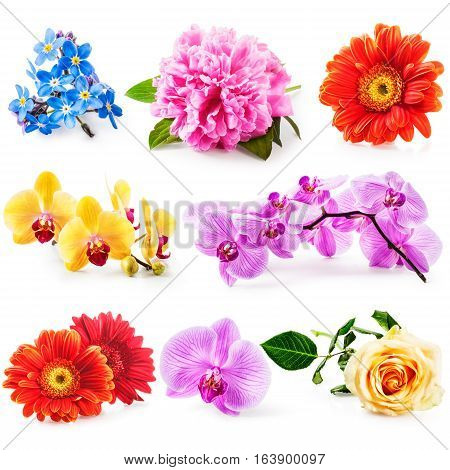 Flower collection isolated on white background. Set of orchid and spring garden flowers as design elements
