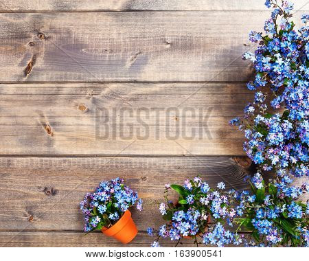 Spring forget me not flowers on wooden background top view flat lay