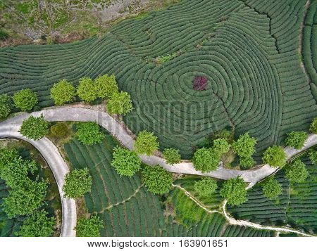 Aerial Photography On Top Of The Mountain Tea Garden Landscape