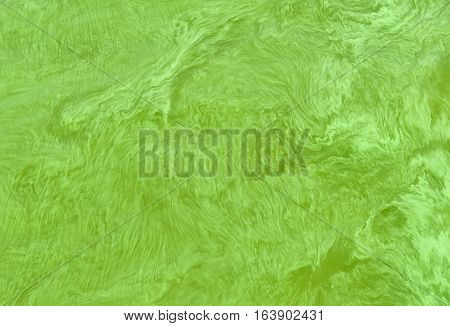Surface of big Ukrainian river Dnepr covered by Cyanobacterias as a result of hot summers.