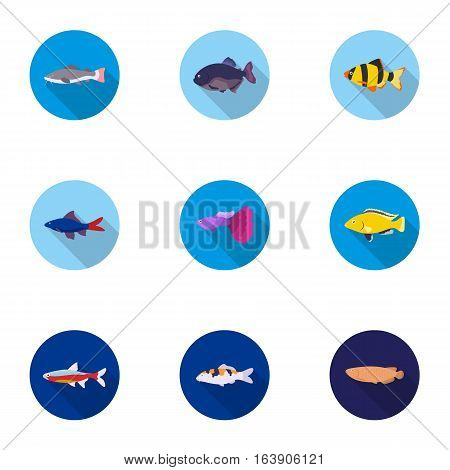 Aquarium fish set icons in flat style. Big collection of aquarium fish vector symbol stock