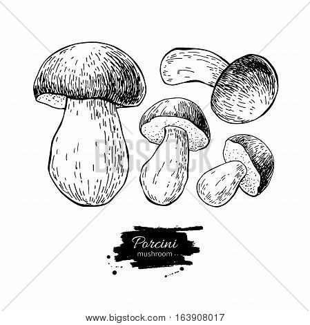 Porcini mushroom hand drawn vector illustration set. Sketch food drawing isolated on white background. Organic vegetarian product. Great  for menu, label, product packaging, recipe