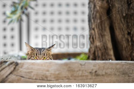 Cat hidden behind a fence looking at camera