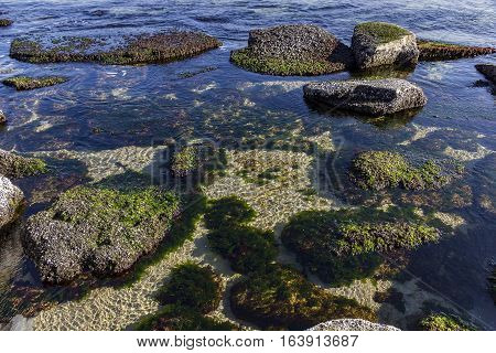 Beauty day view of underwater sea rocks with algae