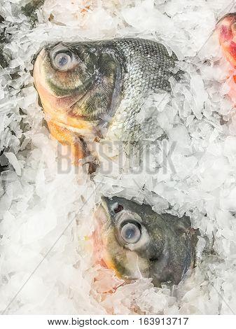 Fresh Water Pomfret Fish