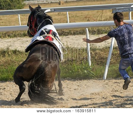 A horse fell after the a start horse racing