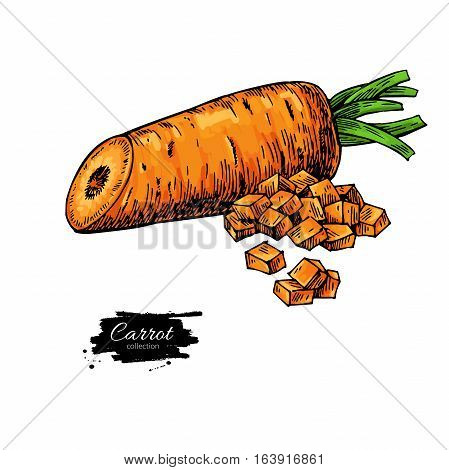 Carrot hand drawn vector illustration. Isolated Vegetable artistic style object with sliced pieces. Detailed vegetarian food drawing. Farm market product. Great for menu, label, icon