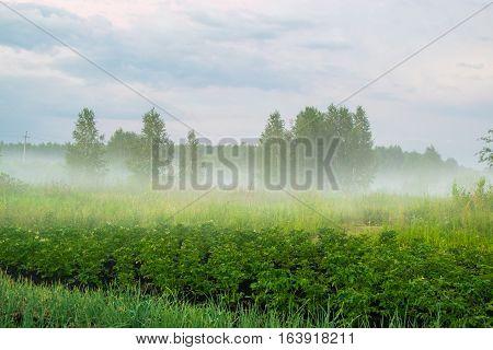 Fog under meadow rural landscape Russia, the Urals