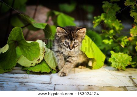 kitty, kitten under the sheets, kitten peeks out from under a leaf, kitty hiding