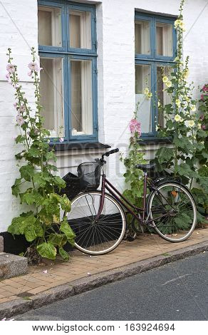 Bicycle at a white wall with hollyhocks