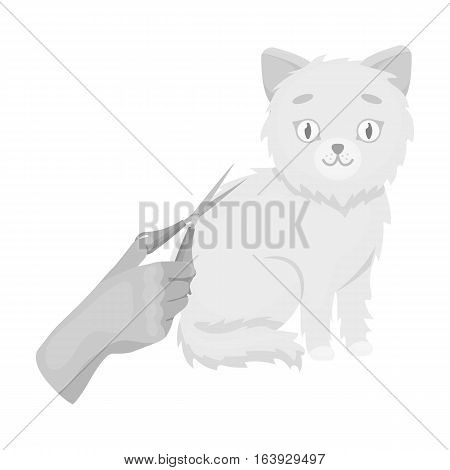 Grooming of a cat icon in monochrome design isolated on white background. Veterinary clinic symbol stock vector illustration.