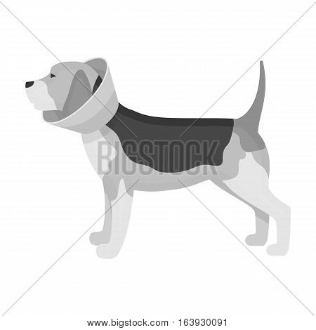 Dog with elizabethan collar icon in monochrome design isolated on white background. Veterinary clinic symbol stock vector illustration.