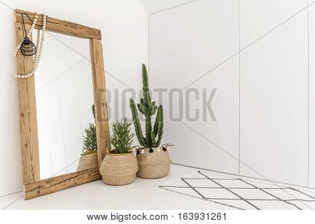 Room With Mirror And Cactus