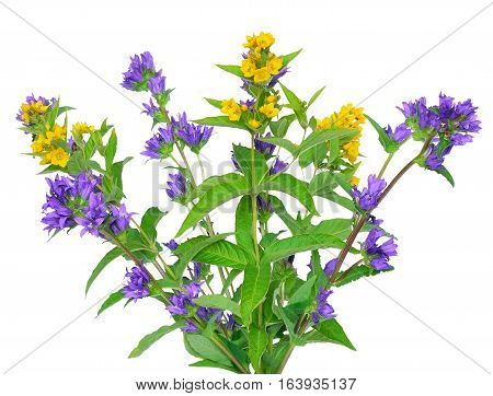 Wildflowers bouquet isolated on the white background