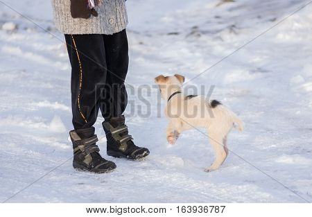 Small mixed breed puppy playing with master on a snow covered winter street