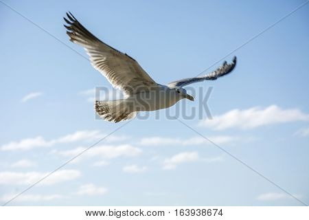 Photo of a bird with blue sky, soft colours and sunlight