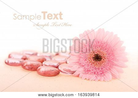 Two hot pink daisies and pink pebbles