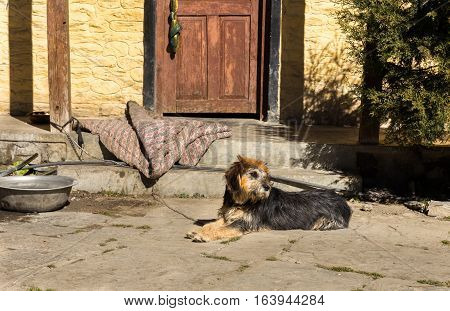 dog lying at the door and looking away.