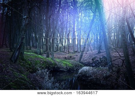 Magical dark and mysterious forest. Nature in the woods.