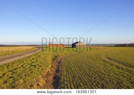 Farm Buildings And Wheat
