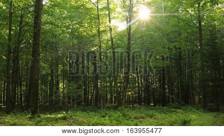 Sunlight filters through the treetops onto the forest floor.